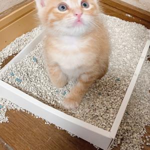 猫のトイレの疑問 - 猫初心者