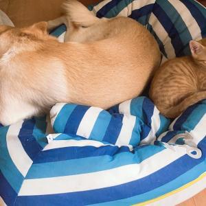 猫の寝場所の疑問 - 猫初心者
