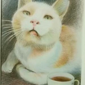 Cafe momo のゴウちゃん
