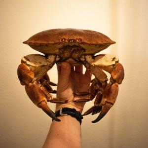 【ロンドン車で日帰りカニ旅】Southwoldで海鮮盛りを食す