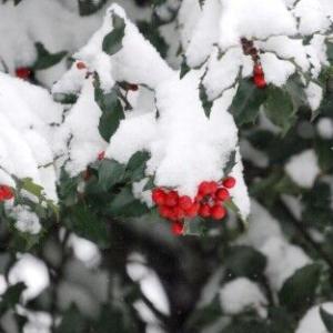 望海風斗さんのトップへの道のり④雪への組替え、そして…
