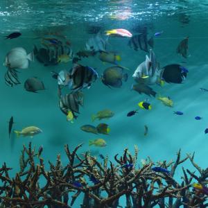 ADHD小学生トマトちゃんが好きな深海の不思議な生き物とは