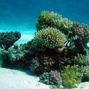 朝日新聞 捏造 サンゴ