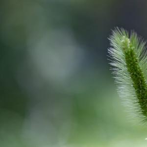 60mmマクロレンズを使っての私の緑の世界を撮ってみた!