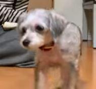 「GACKT」愛犬フェンディは金を稼ぐための道具だった!飼育放棄で炎上!