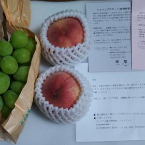東京計器のプレミアム優待倶楽部より「シャインマスカット他」選択品到着(クロス取得)