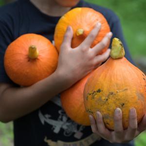 タネから創る -vol,4   赤皮栗かぼちゃのプリン