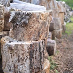 森林再生のフィールドワーク vol,5 @最終回「 回収した倒木を薪にする」編