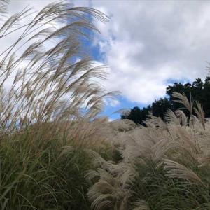 花ススキの美しい岩湧山へ(897.1m)
