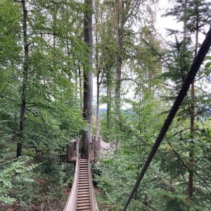 黒い森滞在記: 自然公園を散歩