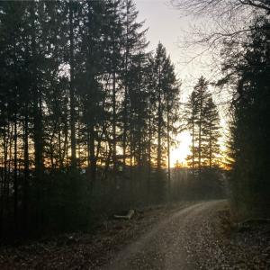 夕暮れの森を走る 2