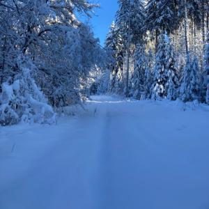 冬の散歩にぴったりの金曜日