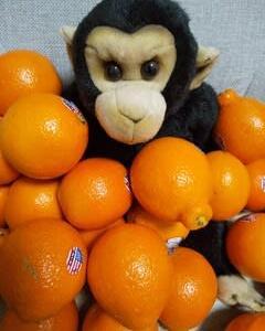 ライナス・ポーリング博士提案「ビタミン C 大量摂取」を日常にせよ