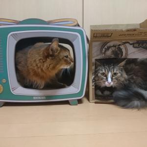猫 「爪とぎTV」を設置してみた