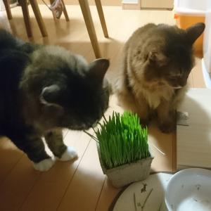 猫草って必要なの?