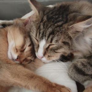 子猫の時のトトとチー