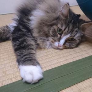 リラックス・モードのトトとチー ~我が家の猫のリラックスしている時のポーズをご紹介します~