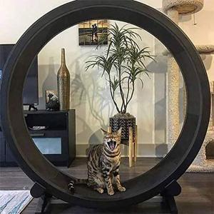 我が家では決して手がでない・・・おもしろ猫アイテム ~ キャットエクササイズホイール ~