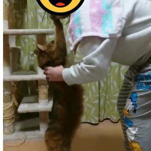猫がびよ~ん! 我が家の猫の変な癖