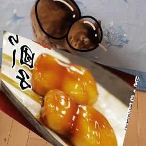 猫アルバム(2021年3月3週目) ~春眠暁を覚えず~