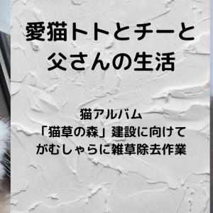 猫アルバム(2021年3月4週目) ~「猫草の森」建設に向けてがむしゃらに雑草除去作業~