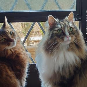 我が家の猫のパトロール風景 今日は何か発見があったかな?