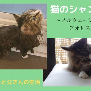 猫のシャンプー ~ノルウェージャンフォレストキャット編~