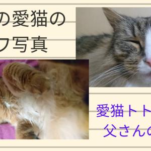 我が家の愛猫のブサカワ写真 ~ノルウェージャンフォレストキャット&ソマリの変顔写真~