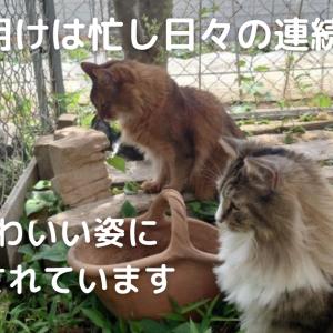 GW明けは忙し日々の連続!猫のかわいい姿に毎日癒されています