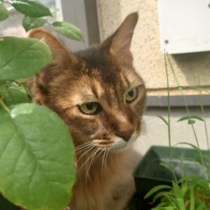 猫ものんびり初秋のニャルソック