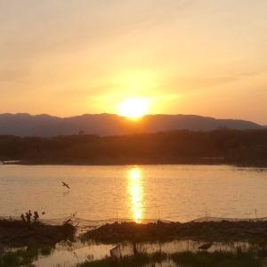 【TABIBITO】伊丹 昆陽池の夕陽