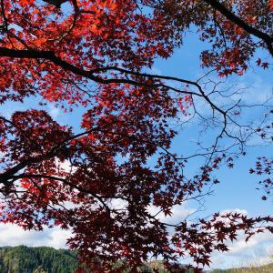 【TABIBITO】紅葉