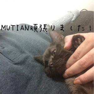 FIP闘病13日目(MUTIAN治療7日目)