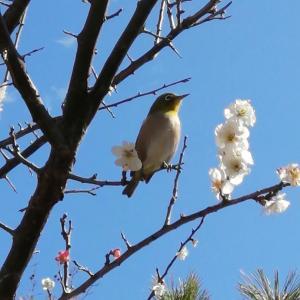 鎌倉から季節のお便り2021年2月【春の到来】