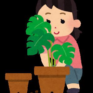 観葉植物のコバエ駆除には、置くだけ簡単な粘着タイプがとってもおすすめ!