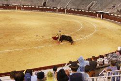 闘牛士が持っている「赤い布」は、牛ではなく人間にアピールするため?