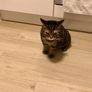 夕食が気に入らなかった猫