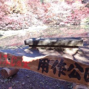 【豊後大野市 用作公園】500本を超える紅葉樹は圧巻!!お弁当を持ってお出掛けしたくなるお散歩コース♪