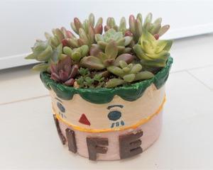 オーロラをカット!!  寄せ植えと葉挿しに♪