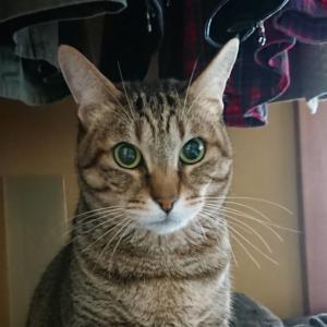在宅ワークと緊急地震速報に猫警備員?