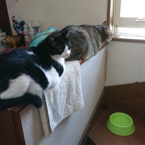 猫。寝てるか食べてるか遊んでるか。来世は猫で。
