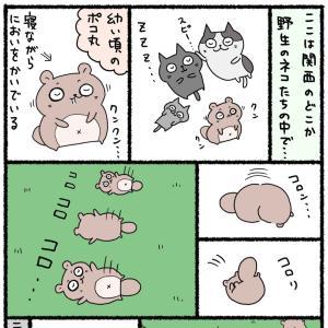 【番外】ポコ丸との出会い