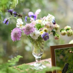 4月の庭~Stay Home