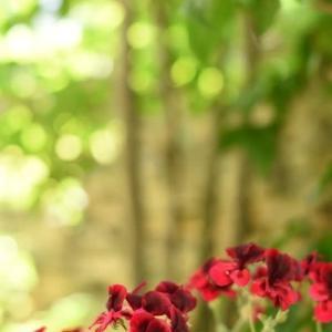 5月の庭~嬉しい訪問者♪