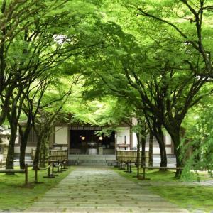 夏の緑と名残の紫陽花~呑山(のみやま)観音寺