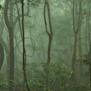 霧に抱かれて~雲仙フォトブック ①