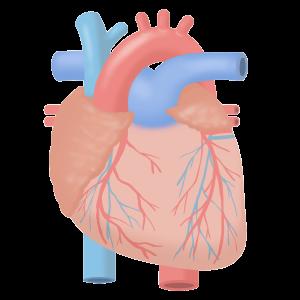 急性心筋梗塞の看護2
