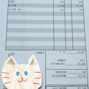 猫*抗がん剤治療*1回目(4日目の様子)