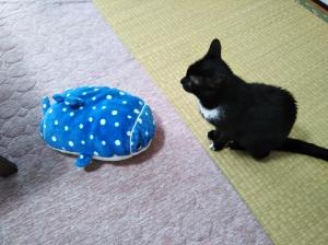 猫*抗がん剤治療*1回目(5日目の様子)