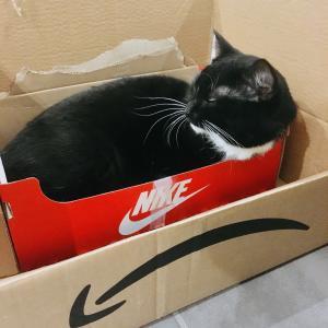 【ドイツ生活】ドイツで猫が骨折や病気になった緊急時の対応